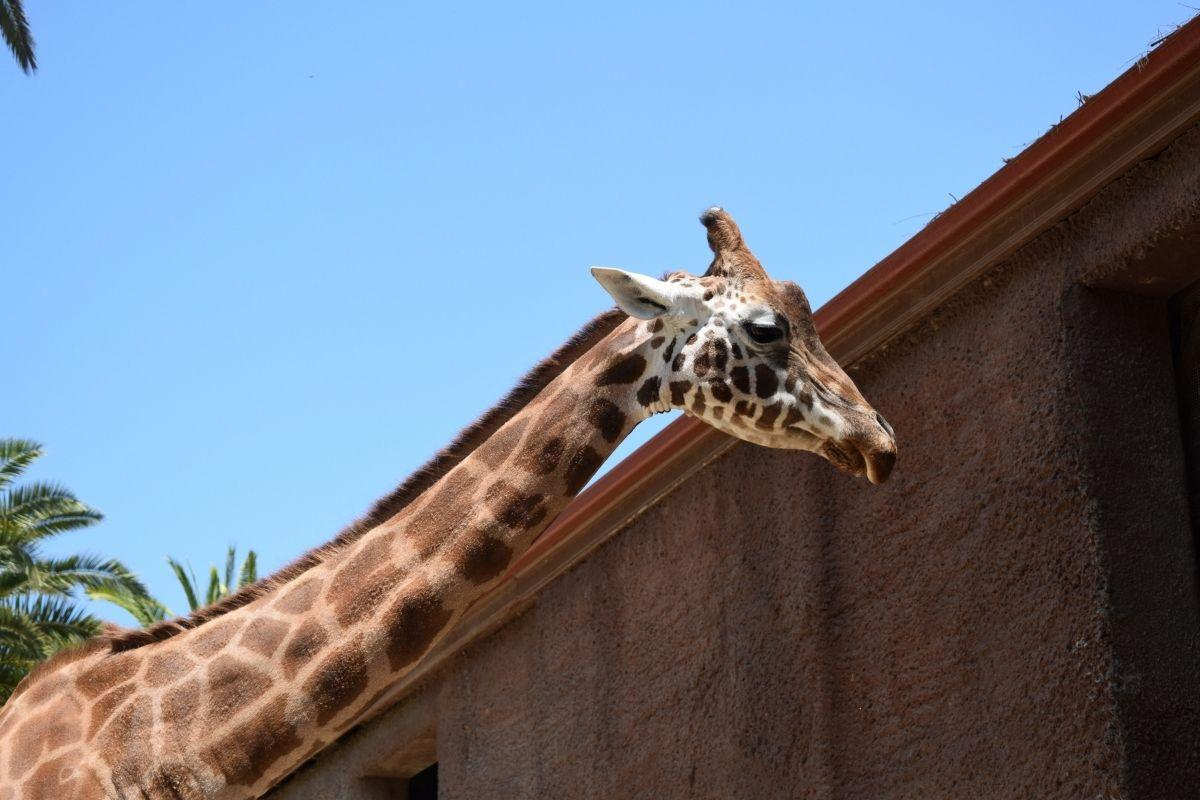 adelaide zoo is one of the most renown landmark in south australia